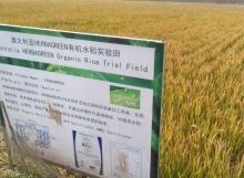 Rice Farm Billboard-1